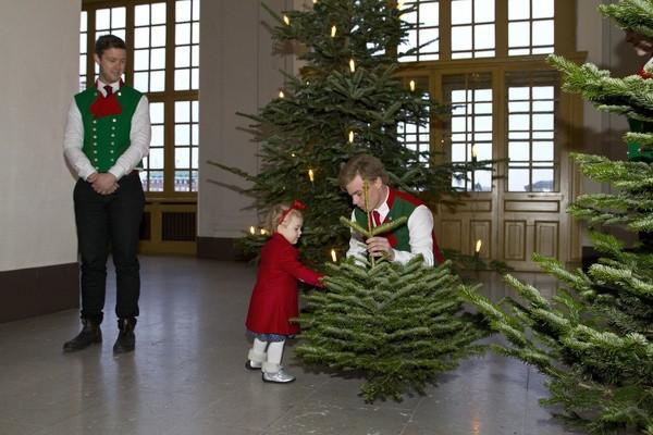 Estelle et les sapins de Noël